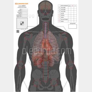 Алебарда мішень анатомічний силует ALB-50 (5 шт)